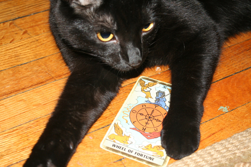 Nixie The Cat gets her own Blog Post (3/3)