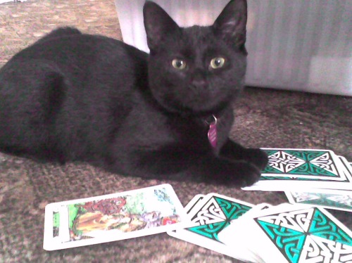 """I read your fortune, but first: cross my paw with catnip."""